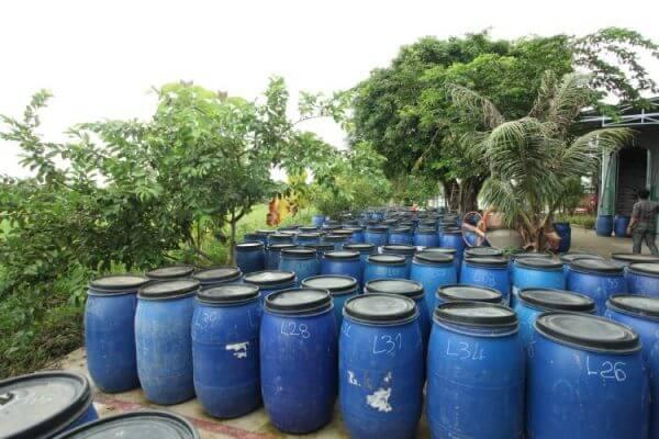 Tinh dầu trầm hương - giai đoạn ủ men