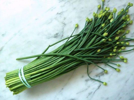 Cây thảo dược: Hành thơm - Củ nén (chives)