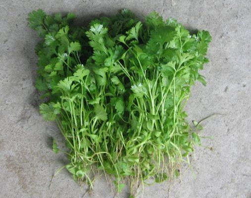 Cây thuốc nam - cây rau mùi