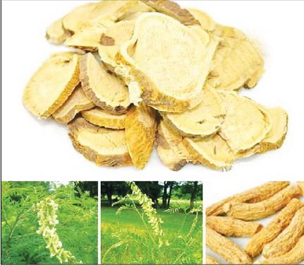 Sơn đậu căn (rễ khô của cây quảng đậu căn) tác dụng thanh nhiệt giải độc, chỉ thống, trị mụn nhọt, cổ họng sưng đau, đau răng…