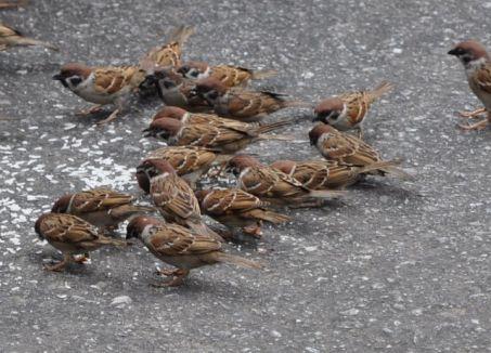 Chim sẻ 1