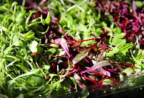 Rau bổ dưỡng tốt cho sức khỏe - Rau mầm có hàm lượng vitamin C và E cao