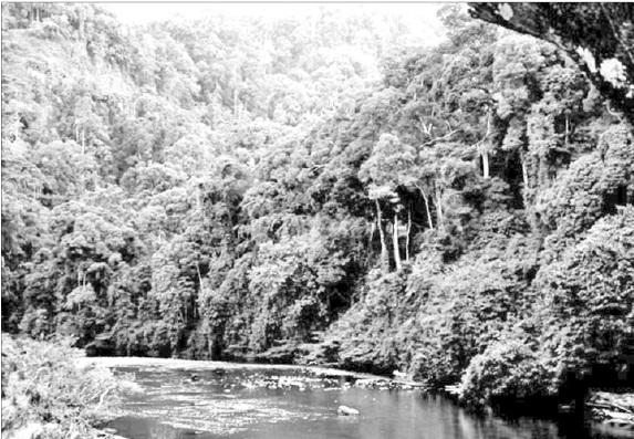 Ða dạng sinh học - Việt Nam có hệ sinh thái rừng phong phú và đa dạng.